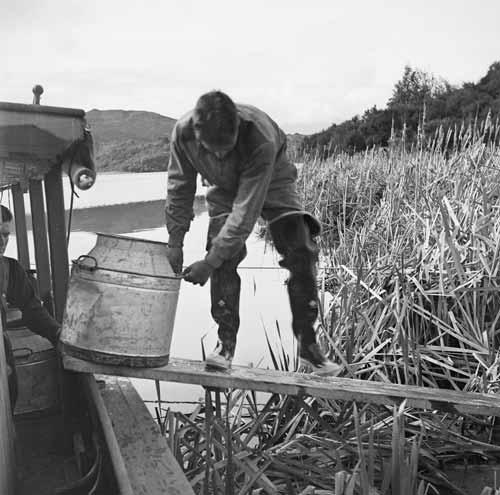 Releasing trout