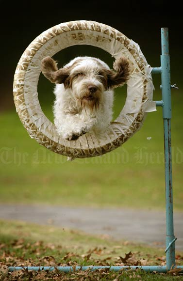 Showing agility