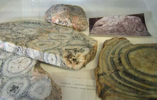 Orbicular granite