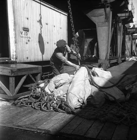 Loading beef, Wellington wharves, 1945
