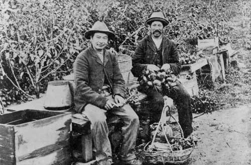 Market gardeners