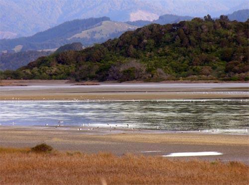Wading birds, Ōhiwa