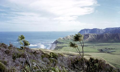 Whangaparāoa / Cape Runaway