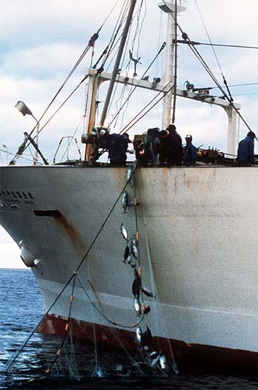 Japanese tuna boats