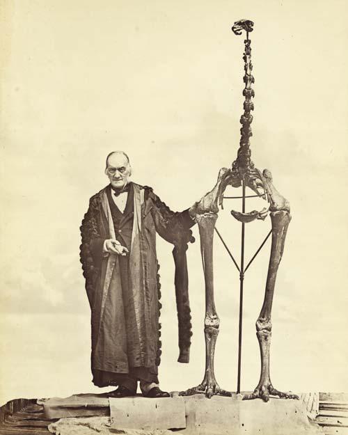 Richard Owen and Dinornis giganteus