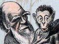 Darwin as a monkey