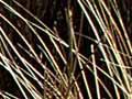 Tussock–shrubland, Blue Mountains, West Otago