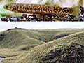Typical habitats